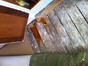 dry wet rot treatments mansfield nottingham 2